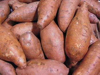 batata - patata americana